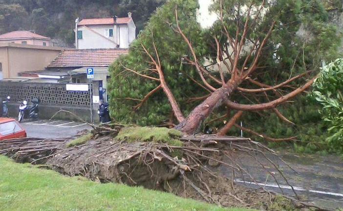 I danni provocati dal forte vento in Toscana